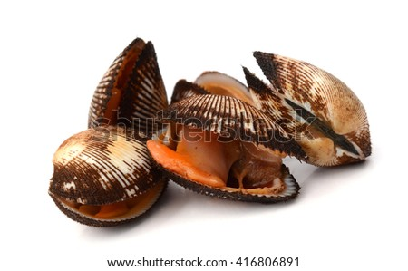 blood clam, one of the traditional food for new year in China - stock photo