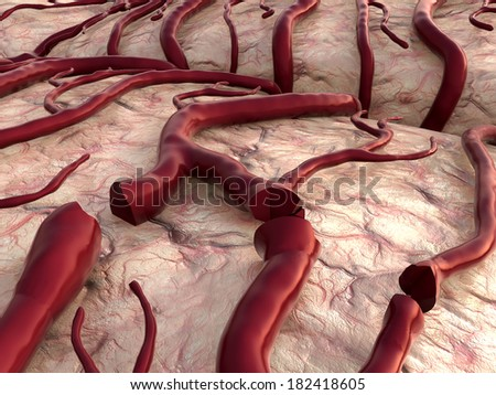 blood loss, insult, circulatory system, disease, heart attack, Capillary