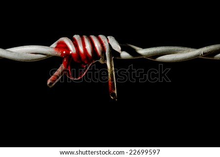 Blood on a barbed wire spike, symbol of torture and freedom - stock photo