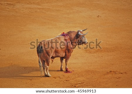 bloody brown bull at bullfight
