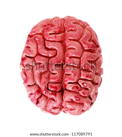 bloody human brain isolated on white background - stock photo