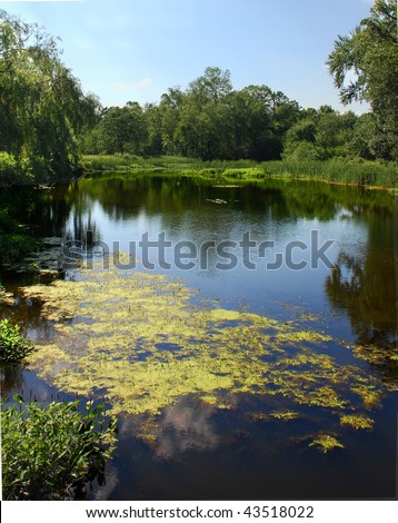 Bloom in a pond - stock photo
