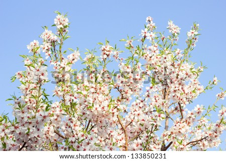 Bloom Tree - stock photo