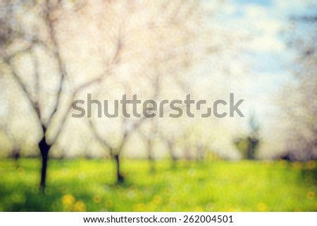 Blooming apple orchard in spring and blue sky. Retro filtered. Beauty world. Natural blurred background. Soft light effect.  - stock photo