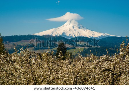Blooming apple orchards and Mount Hood, Hood River Valley, Oregon - stock photo