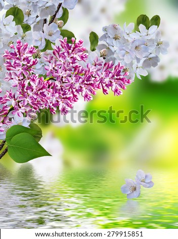 blooming apple tree. lilac - stock photo