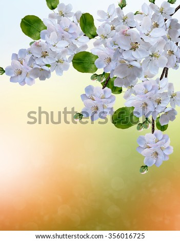 blooming apple tree. Spring landscape - stock photo