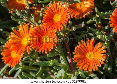 blooming beautiful Orange flower