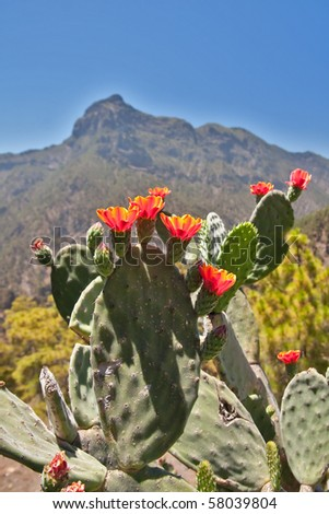 Blooming Cactus in front of Mountain - stock photo