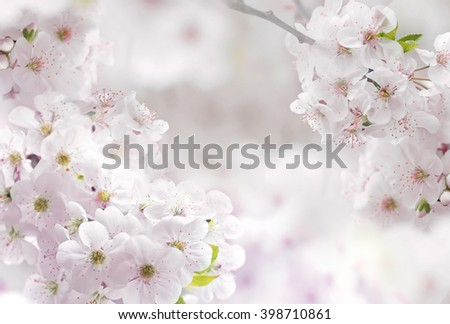 Blooming cherry with beautiful pastel pink background. Macro. Beautiful blurred background. Floral spring background. - stock photo