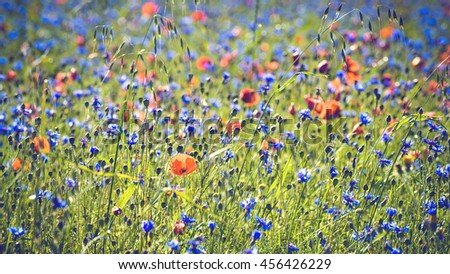 Blooming colorful flowers during the summer day in Umbria, Italy. - stock photo