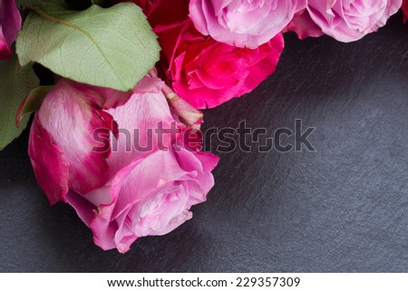 blooming dark and  pink roses  laying  on black  stone  table close up - stock photo