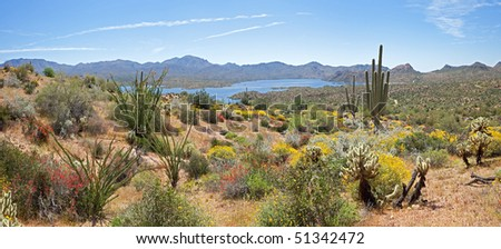 Blooming Desert, with Saguaros, and various Cacti around Bartlett Lake. - stock photo