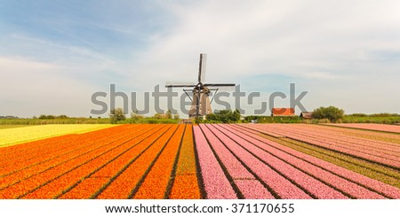Blooming Dutch field with colorful tulips in front of an old historical windmill - stock photo