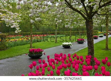 Blooming flowers and blossom in dutch garden 'Keukenhof', Holland