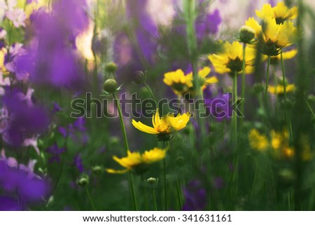 blooming flowers in a meadow - stock photo
