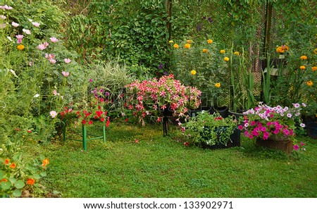 blooming flowers in summer yard garden - stock photo