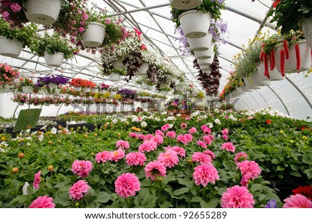 Blooming Flowers inside a garden center greenhouse - stock photo