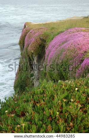 Blooming Flowers on a Cliff at California Coast