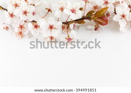 Blooming flowers on tree branches Spring time - stock photo
