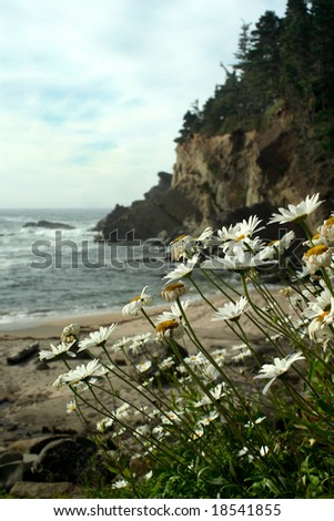 Blooming flowers with the sand stone cliffs of the Oregon coast in the back ground. - stock photo