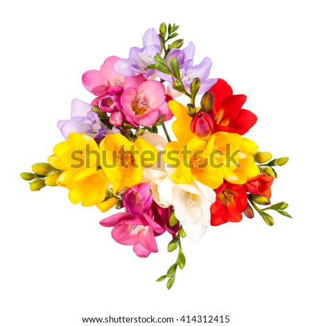 Blooming Freesia. Isolated on white background. - stock photo