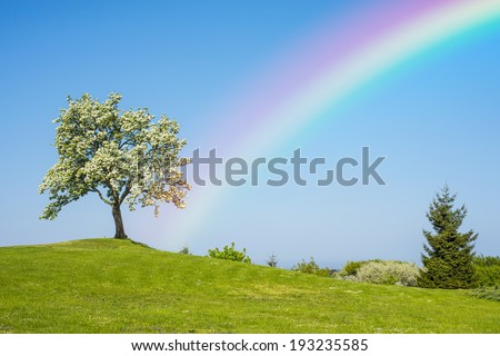 Blooming fruit tree with rainbow - stock photo