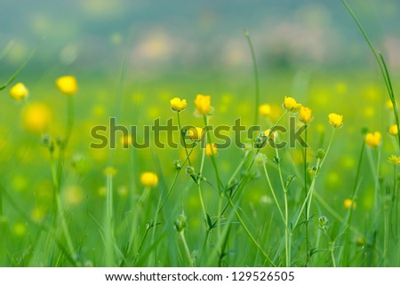 Blooming little meadow flower - stock photo