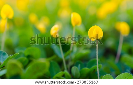 Blooming little yellow meadow flower - stock photo