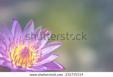 Blooming lotus flower that beautiful peace stock photo royalty free blooming lotus flower that beautiful and peace mightylinksfo
