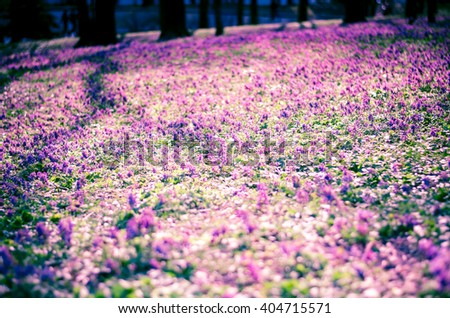 blooming meadow in the park - stock photo