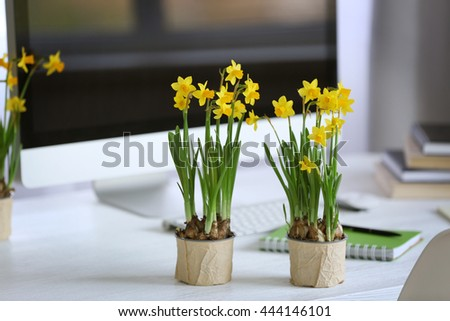 Blooming narcissus flowers on table indoors - stock photo