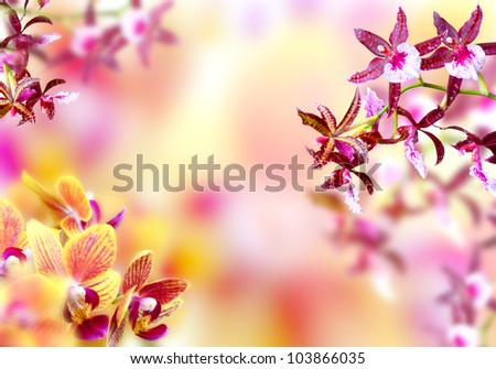 Blooming pink and yellow orchid background - stock photo
