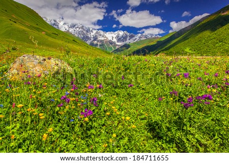 Blooming pink flowers in the mountain. Upper Svaneti, Georgia, the main Caucasian ridge.