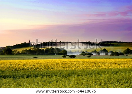 Blooming rapeseed field landscape after the sunrise