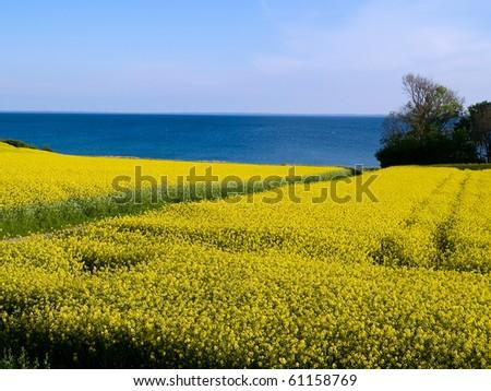 Blooming rapeseed flowers field - modern futuristic alternative energy background - stock photo