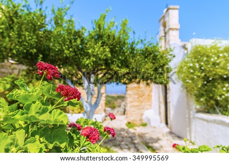 Blooming red flowers in the garden,near traditional greek white stone church of the Monastery of Saint John Theologian in Ancient Aptera town at Crete island.Beautiful floral background.Greece.Europe. - stock photo