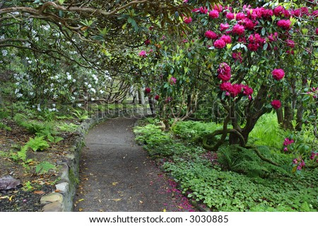 Blooming Rhododendron in a botanic garden.