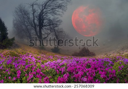 Blooming rhododendrons among alpine peaks is the eternal beauty and joy to the viewer traveling among forests and alpine peaks of Ukraine. Bloom from May to June - stock photo