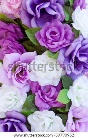 blooming roses - stock photo
