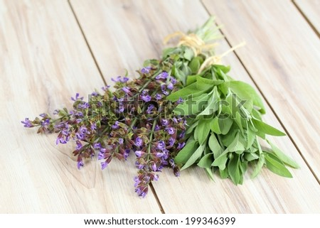 Blooming sage and its leaves, lat. Salvia officinalis - stock photo