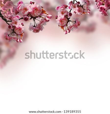Blooming sakura on the blurred background - stock photo