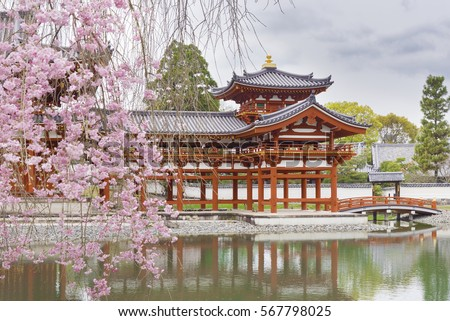 Blooming sakura tree in Byodo-in Buddhist temple in Uji, Kyoto, Japan