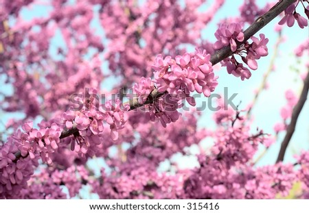 blooming season - stock photo