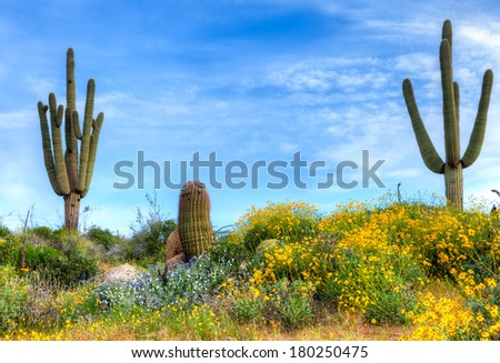 Blooming Sonoran Desert. - stock photo