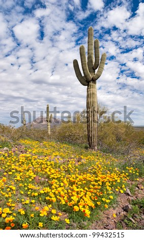 Blooming Sonoran Desert.