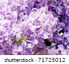 blooming spring flowers - stock photo