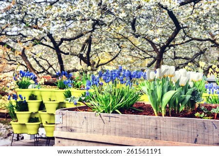 Blooming spring flowers in garden - stock photo