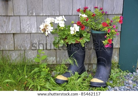Blooming summer flowers planted in old rubber boots. - stock photo