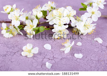 Blooming tree branch with white flowers on wooden background - stock photo